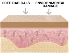 Free Radicals & Environmental Damage